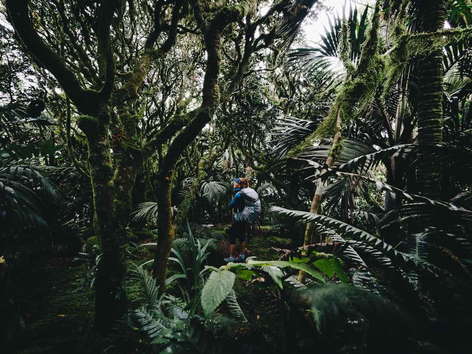 Lord Howe Island's Photography Hot Spots, Matt Horspool, jungle, rainforest, mist forest, greenery, undergrowth