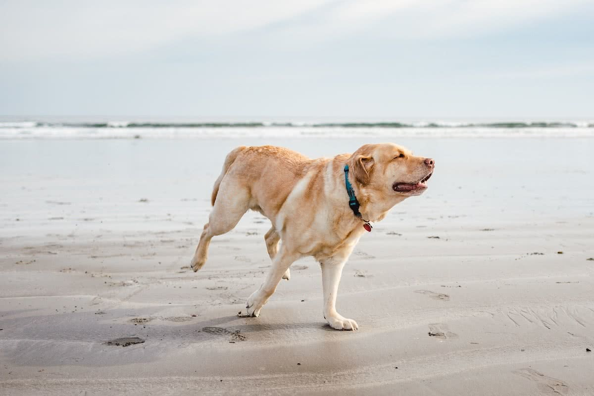 danielle-macinnes, unsplash, dog, beach