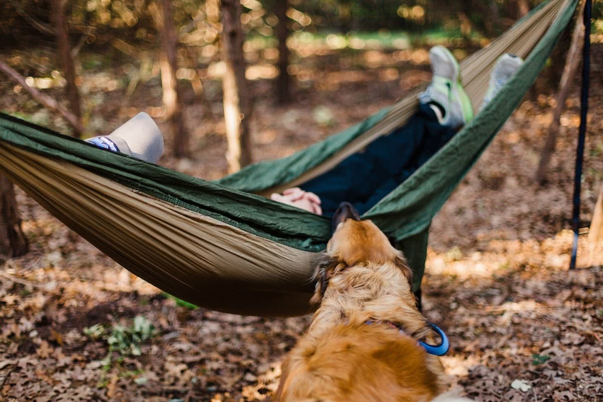 heather-mount, unsplash, dog, camping, hammock