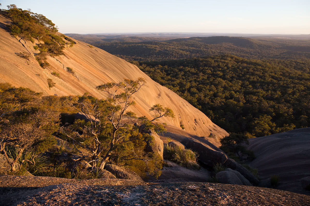 The Bare Beauty Of Bald Rock National Park (NSW) // Photo Essay, Liam Hardy, forest, rock formation, boulder, slope, sandstone