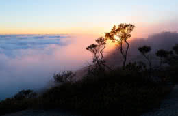 The Bare Beauty Of Bald Rock National Park (NSW) // Photo Essay, Liam Hardy, trees, incline, slope, sunrise, clouds