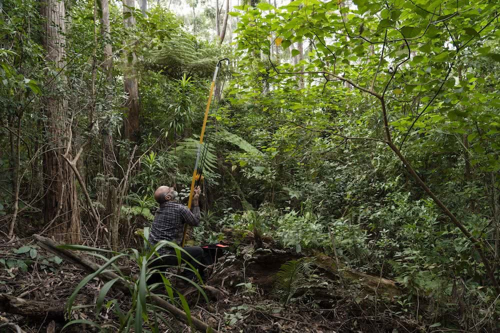 Steve Pearce, Searching For Giants // Big Trees Of Bellingen, Kai Wild, Conservation, logging