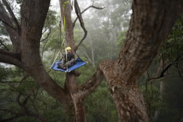 Steve Pearce, Searching For Giants // Big Trees Of Bellingen, Kai Wild, Conservation, logging, portaledge