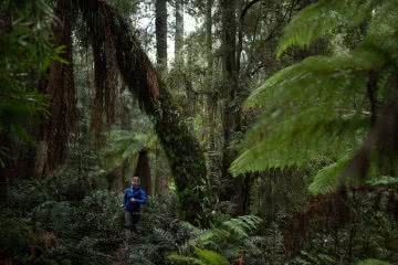 K Wright, tarkine, takayna, tasmania, world heritage protection, running, rainforest