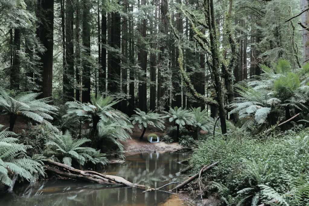 Top 5 tips for a quiet campsite Mattie Gould Ain Raadik tent rainforest creek