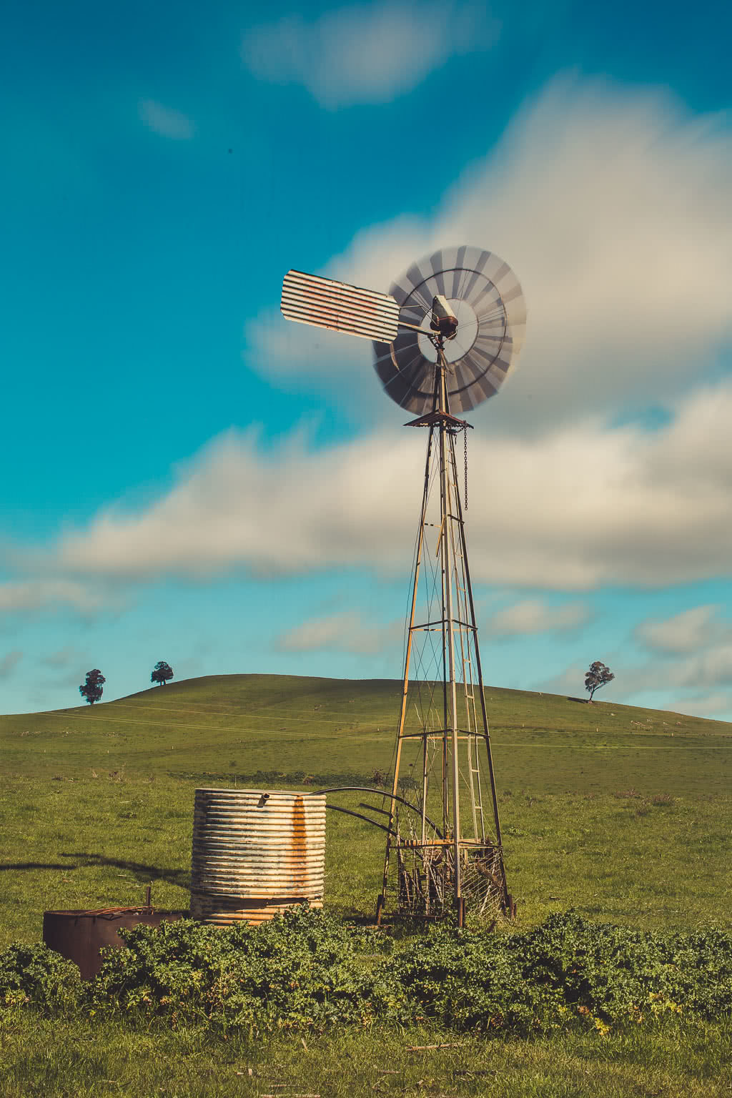 Cootamundra's Canola Fields & The Sugar Pine Forest (NSW), Alfonso Calero, Riverina, NSW, windmill