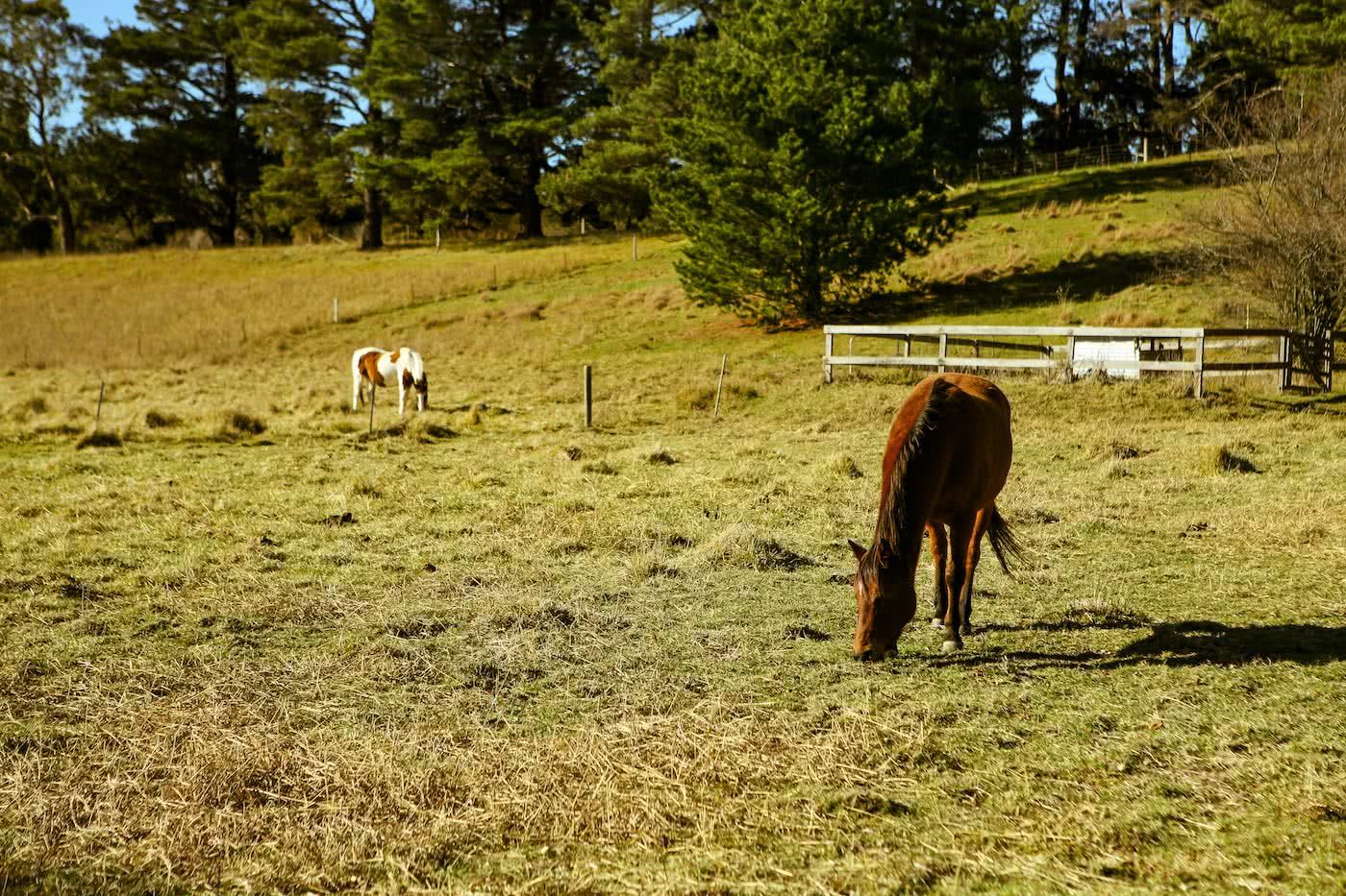 Two Wheels And A Teepee // Glamping & Cycling In Bowral (NSW), Karl Reynolds, horse, animal, field, grazing