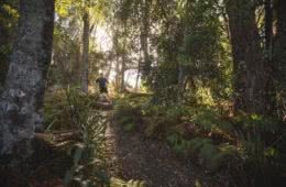 Reflections On A Restful Trail, Jon Harris, sunrise, trail running, drawing room rocks, rainforest, dreamy