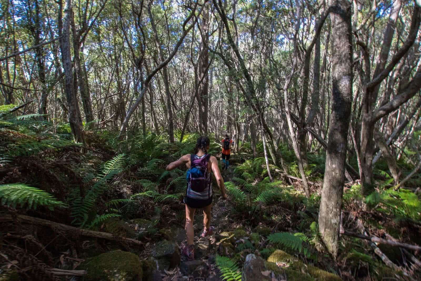 The Hidden Benefits Of Trail Running, photo by Chris Ord, Tasmania, tour, rainforest, trail running