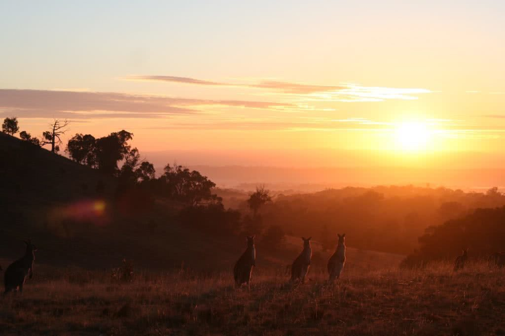 Adventurise your daily commute Mattie Gould sunrise kangaroo