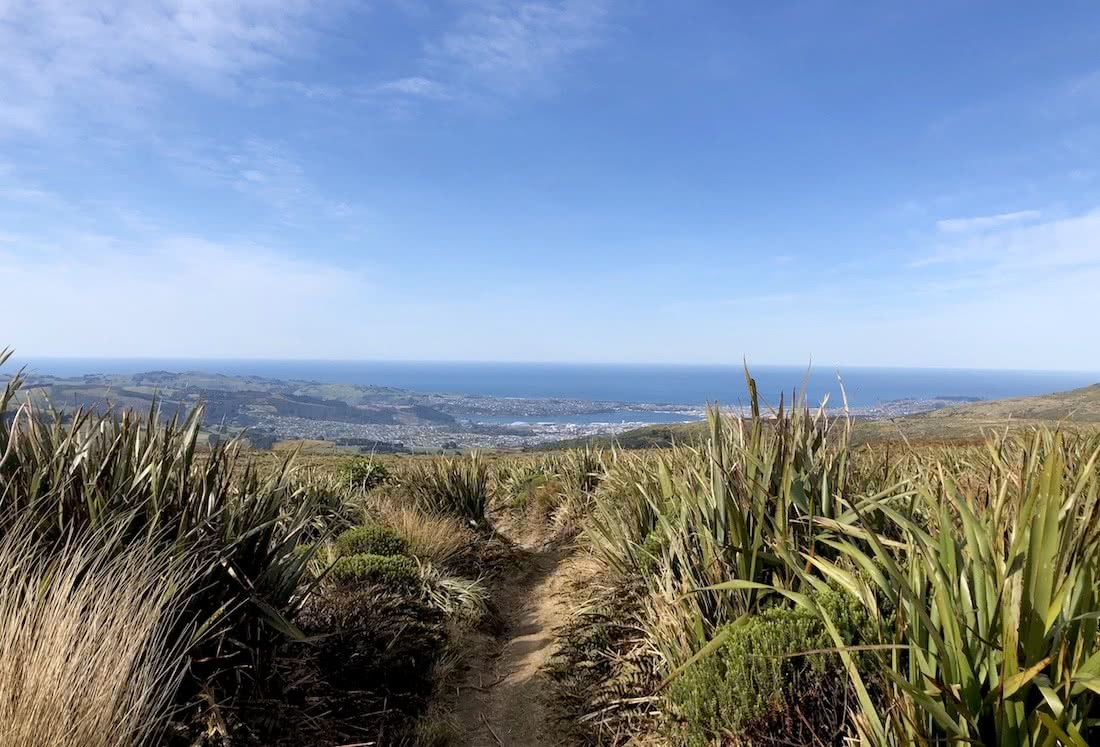 The North Face Pros Reveal Their Favourite Trail Runs, Photo by Victoria Beck, Dunedin, New Zealand, trail running month, ocean, grass, trail