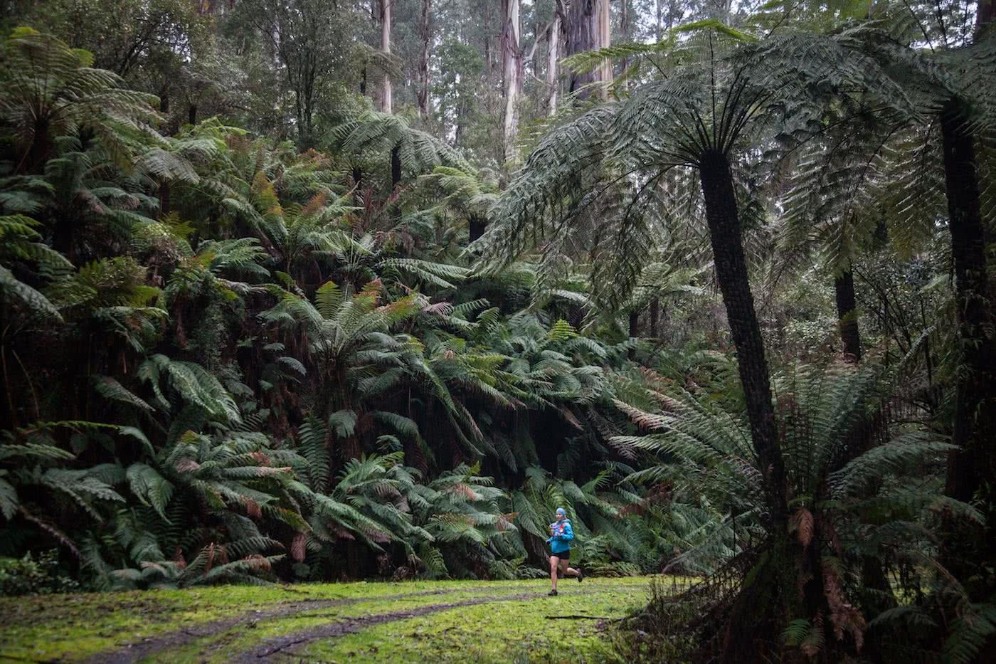 Lessons From A Trail Running Rookie, Simone Mckeown, photographer Chris Ord, runner, rainforest, trail