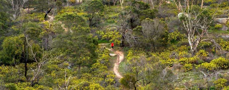 The Beauty Of An Early Morning Run, Michelle Linnane, trail running month, victoria, vibe, wildflowers