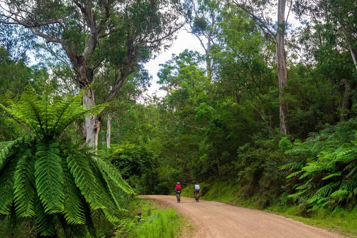 Bikepacking Canberra To Batemans Bay, Matti Gould, dirt road, bikes cycling, forest