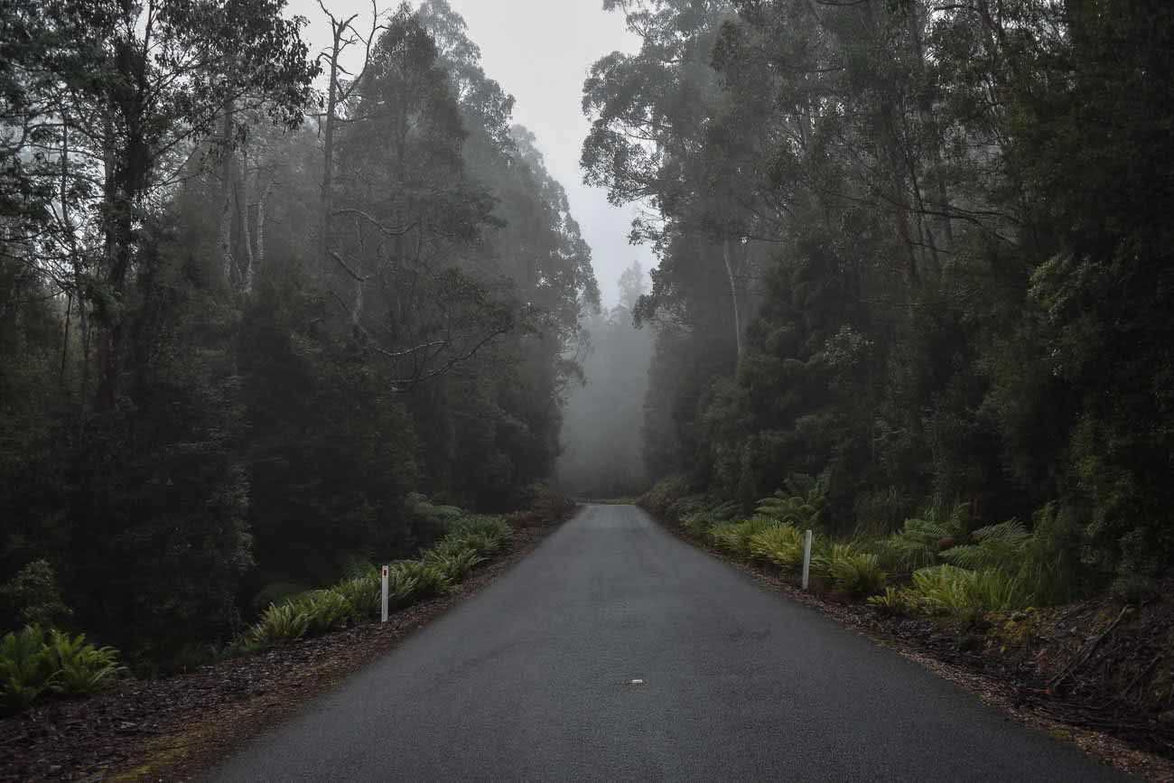 Winter Road Trippin' Tassie // Photo Essay Brent Frondall road, trees, fog