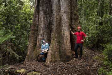 Australia's Tallest Tree Joins the 100m Club Mattie Gould TheTreeProjects-Centurion-WEB-SPP08812