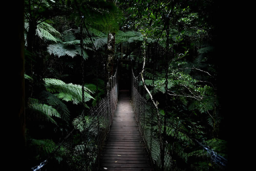 The 21 Best Brisbane Based Outdoor Adventures & Day Trips, Photo by Lisa Owen, lamington national park, rainforest, queensland