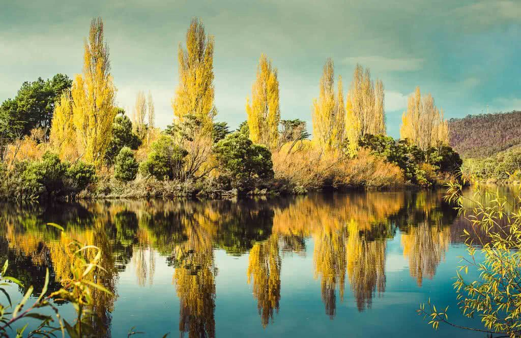 A Photographer's Guide To Shooting Wild Tasmania, Alfonso Calero, Tasmania, photography, poplars, derwent river
