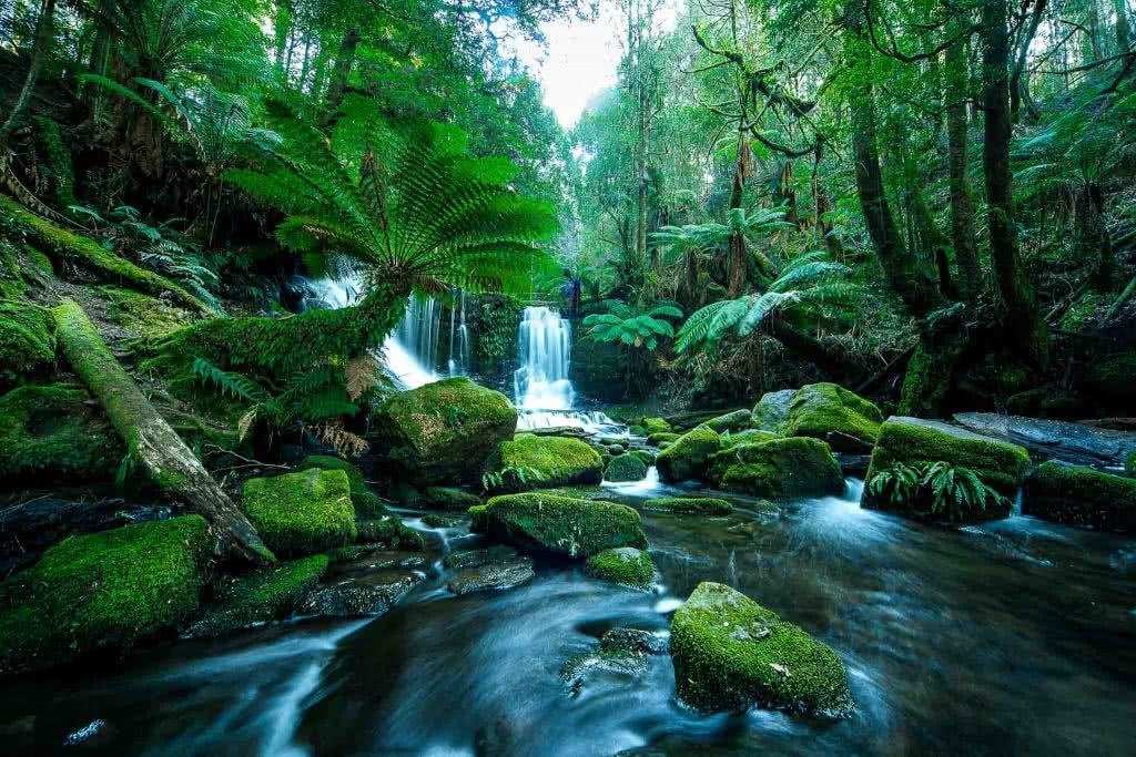 A Photographer's Guide To Shooting Wild Tasmania, Alfonso Calero, Tasmania, photography, russell falls, waterfall, rainforest