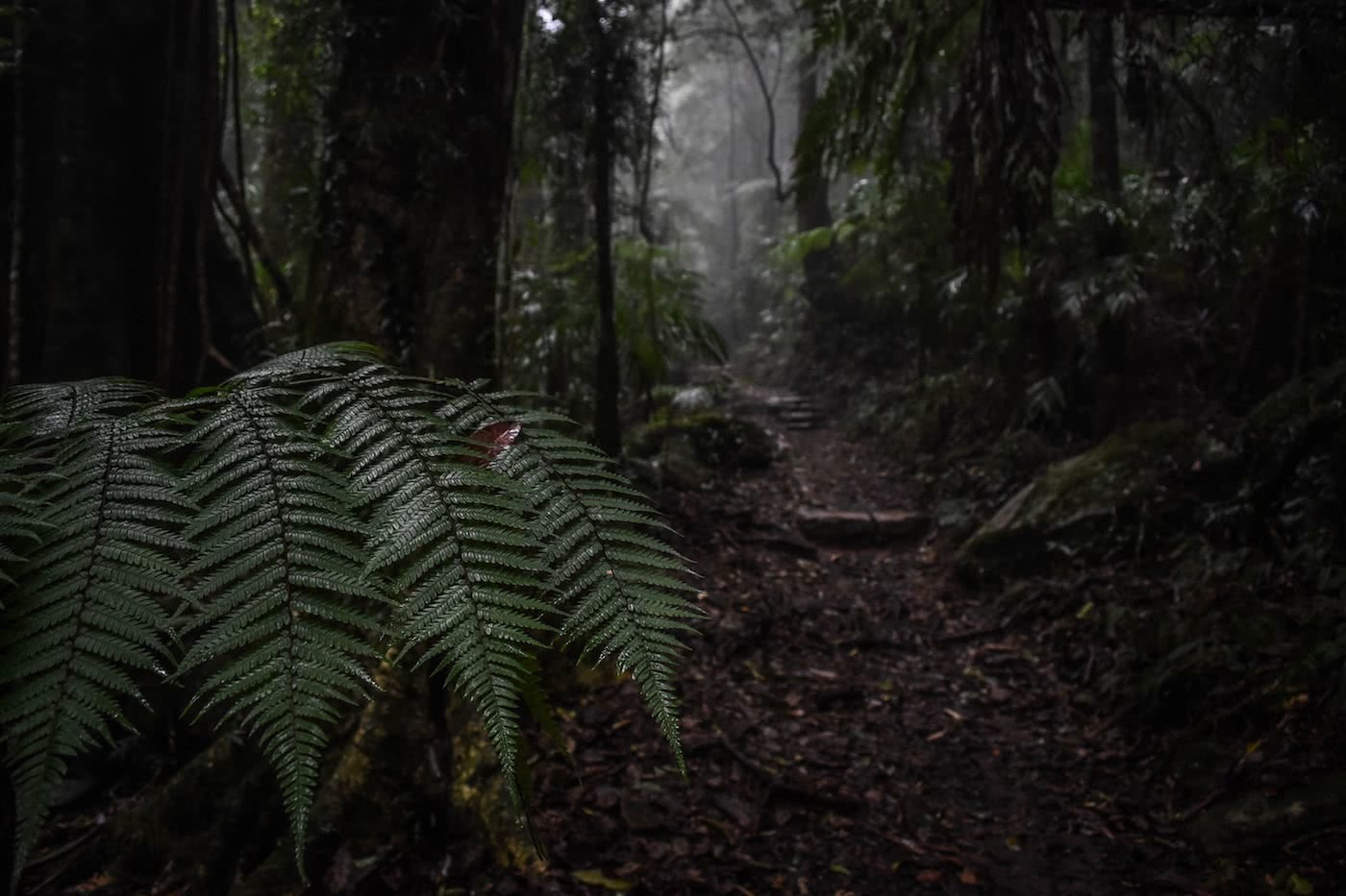 7 Tips For Wet Weather Hiking Lisa Owen, ferns, trail, rainforest,