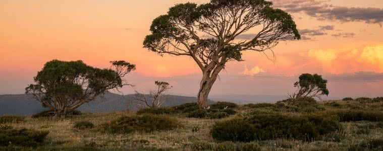 The High Plains on Foot – Four Day Falls Creek Circuit (VIC) Lachlan Fox sunset, gum tree
