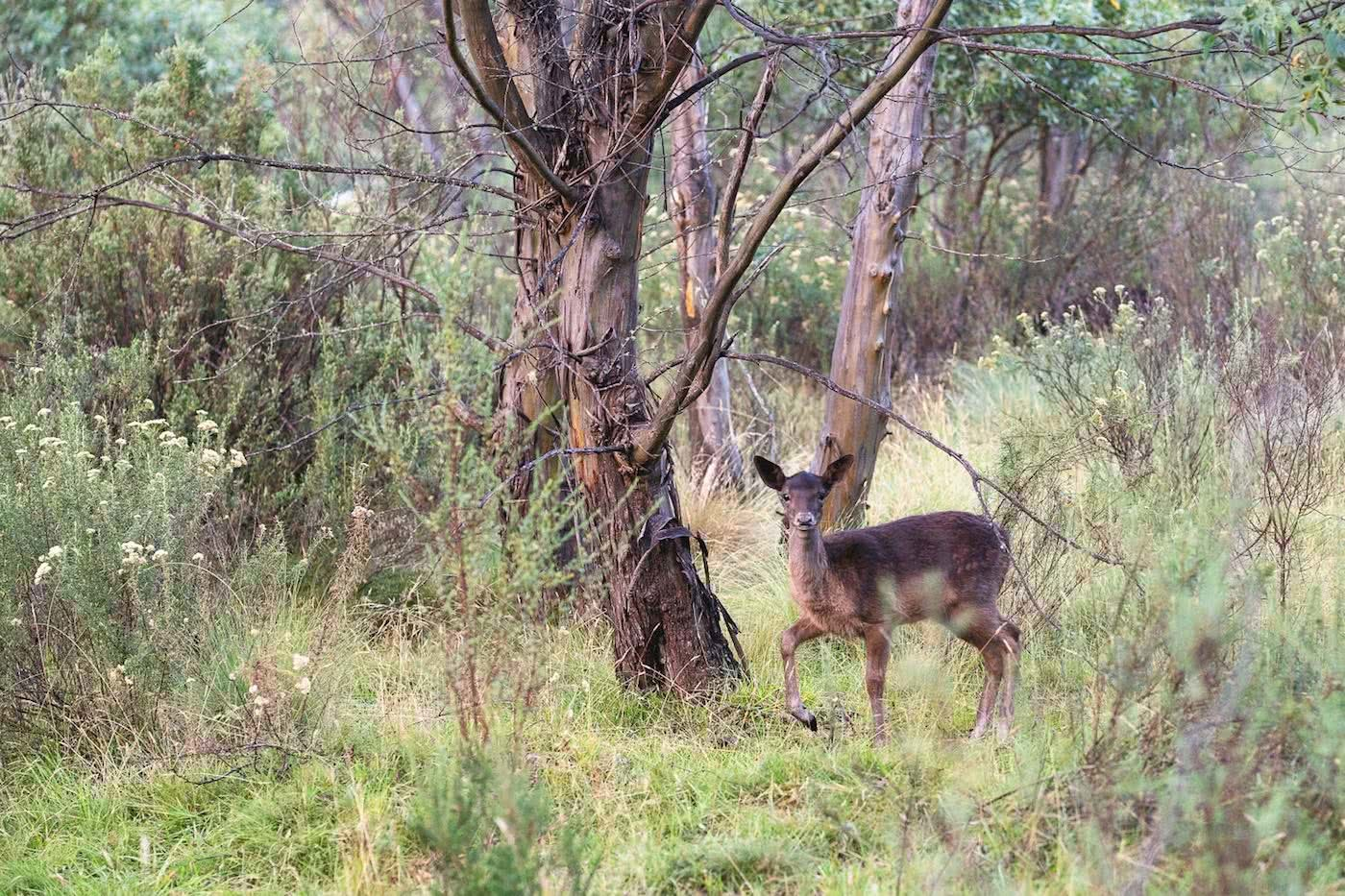 The Mountains Are Calling // Thredbo (NSW) Jon Harris deer, thredbo diggings