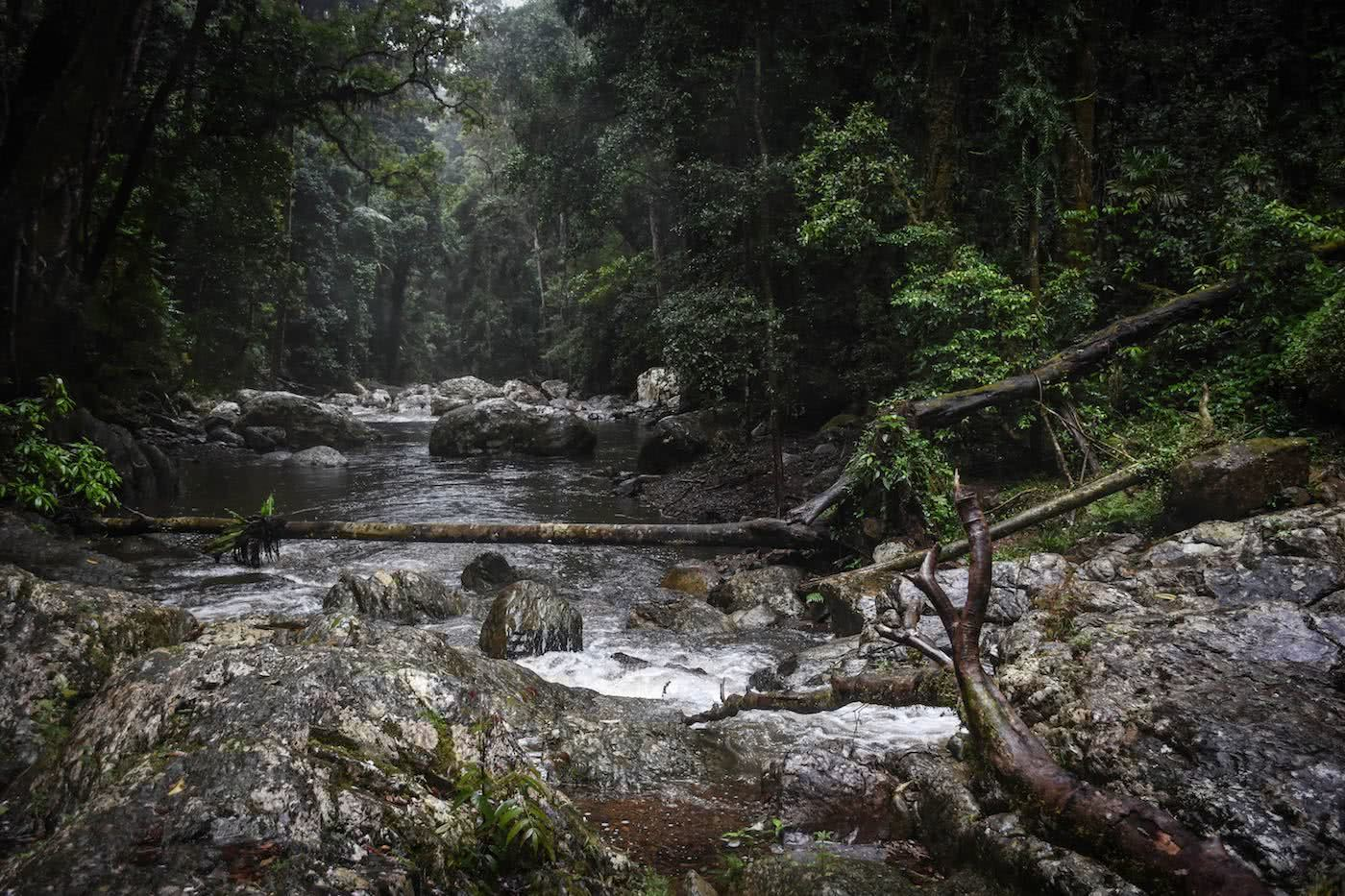 7 Tips For Wet Weather Hiking Lisa Owen, creek, creek crossing, rainforest,