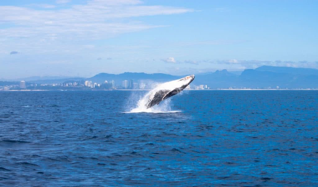 How (And Where) To See The Coolest Native Australian Animals Caitlin Weatherstone whale