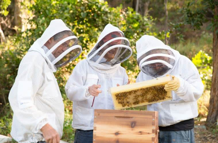 Would You Like Change With That? These Byron Bay Businesses Are Redefining Business With Purpose, Flow, honey, bees