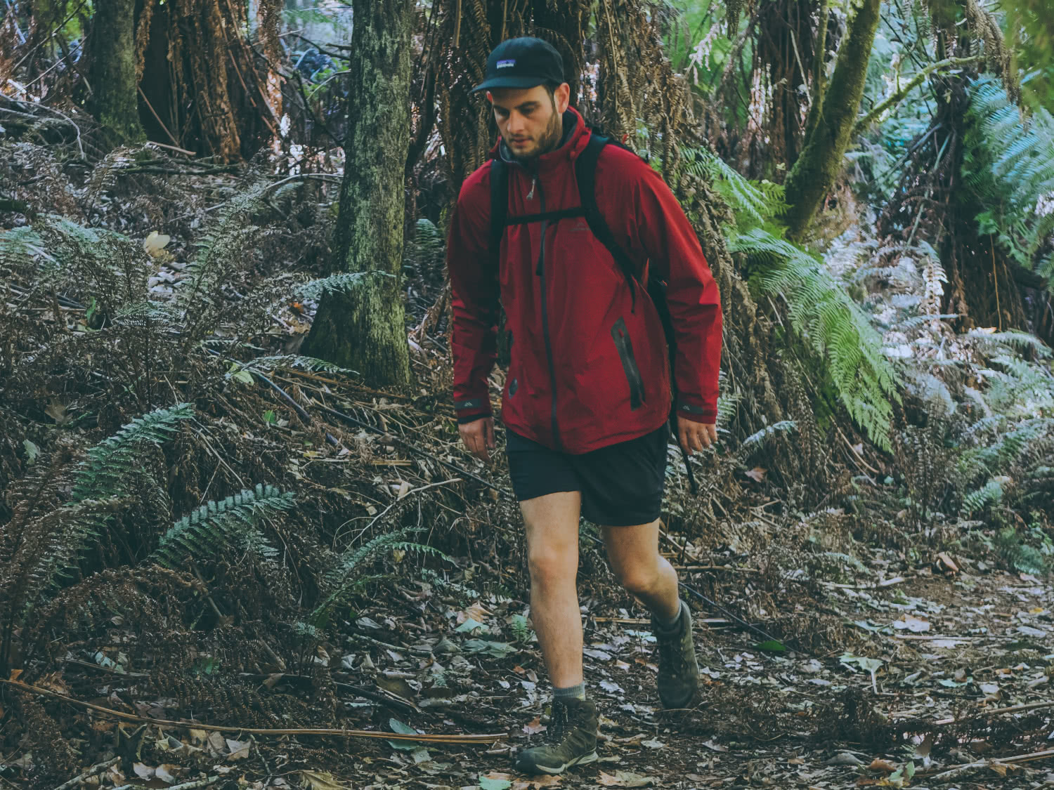 The North Face Hedgehog Hike II GTX // Gear Review Nick Di Giulio hiking, red jacket, forest