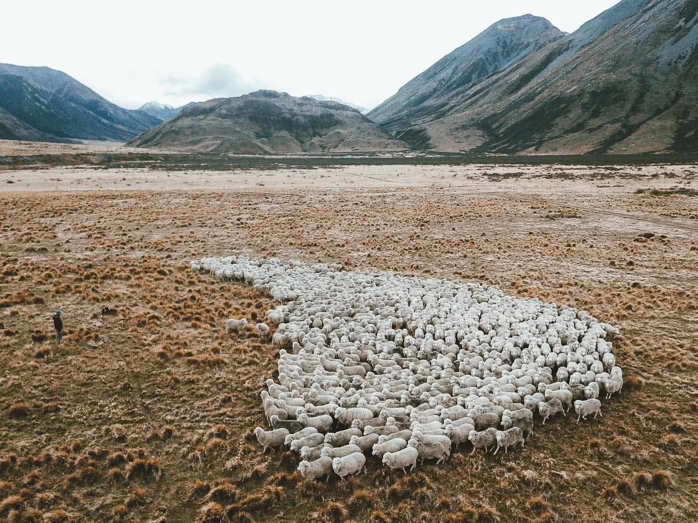 What's Life Like On A Wild South Island Merino Farm?, Photo by Joe Leep, merino, icebreaker, nz, lake heron station, sheep, aerial