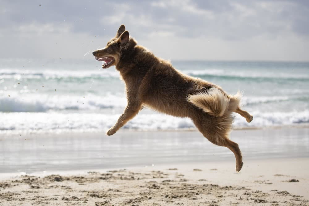 Stunning Coastal Photography From Our Canon Collective Workshops, photo by Chris Sinclair, dog, jump, byron bay