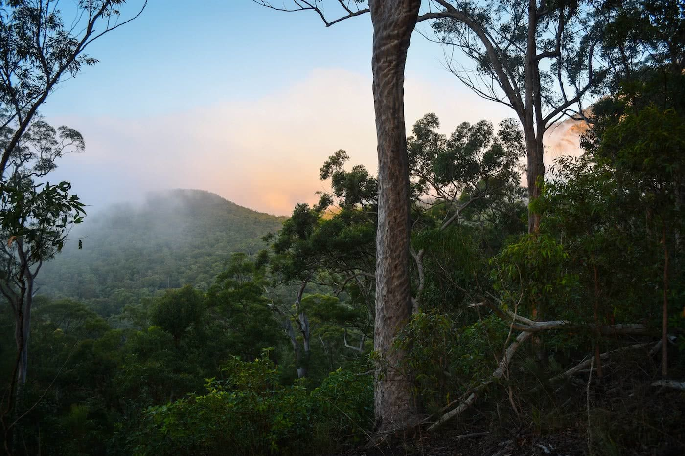 Mini-Hike To A Mountain View// Mt Barney National Park (QLD) Lisa Owen Yellow Pinch Lookout trees, sunrise