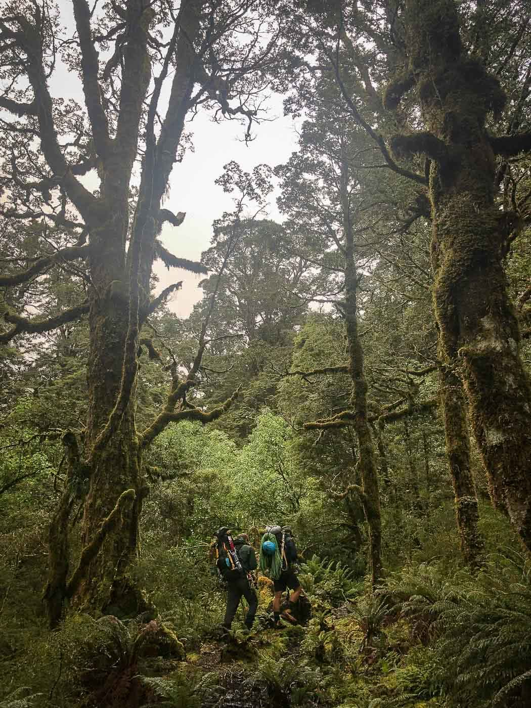 Arc'teryx Beta AR and Alpha SV Waterproof Jackets // Gear Review by Mike Ashelford Beta Jackets (and beta blokes haaa) Arc'teryx Jacket Review-7, muggy rainforest, nz