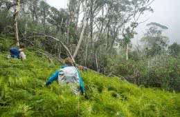 Knowing When To Call It by Lachie Thomas hiking, thick scrub and rain