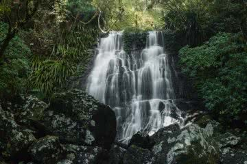 A Step Back In Time // Border Ranges National Park (NSW) by Conor Moore Selva Falls