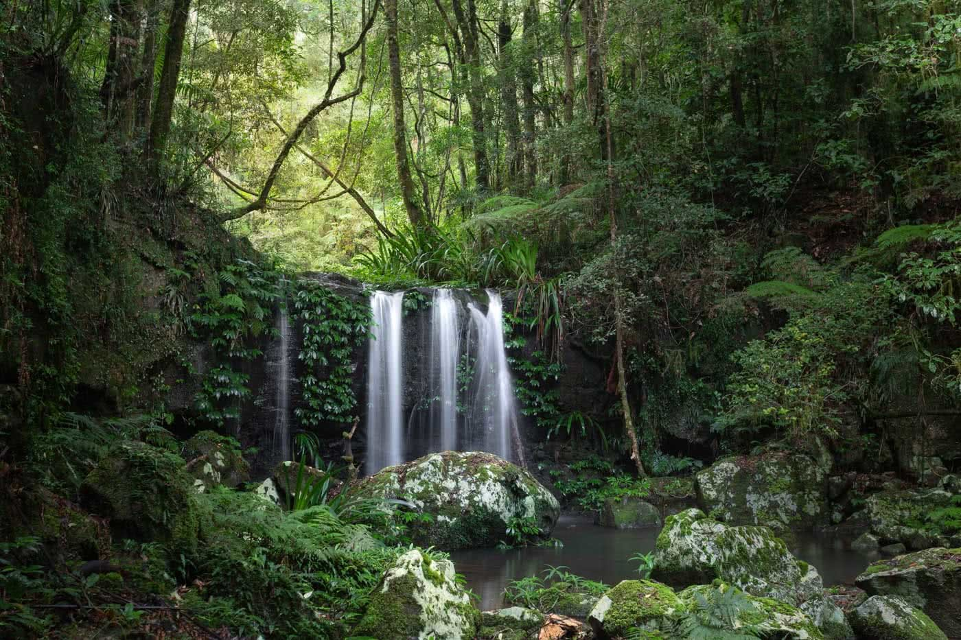 A Step Back In Time // Border Ranges National Park (NSW) by Conor Moore Swanson Falls