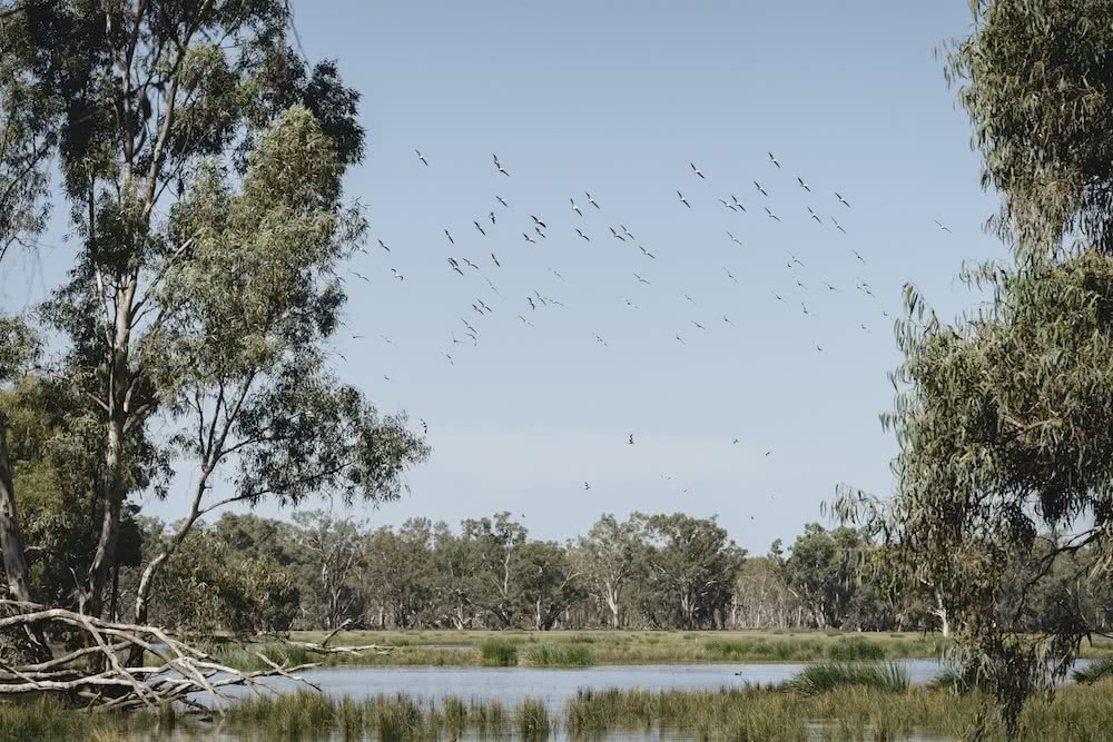 Australia's Oldest Human Remains Can Be Found Where The Outback Meets The Wetlands, photo by Ain Raadik, wetlands, Destination NSW, Balranald, yanga national park