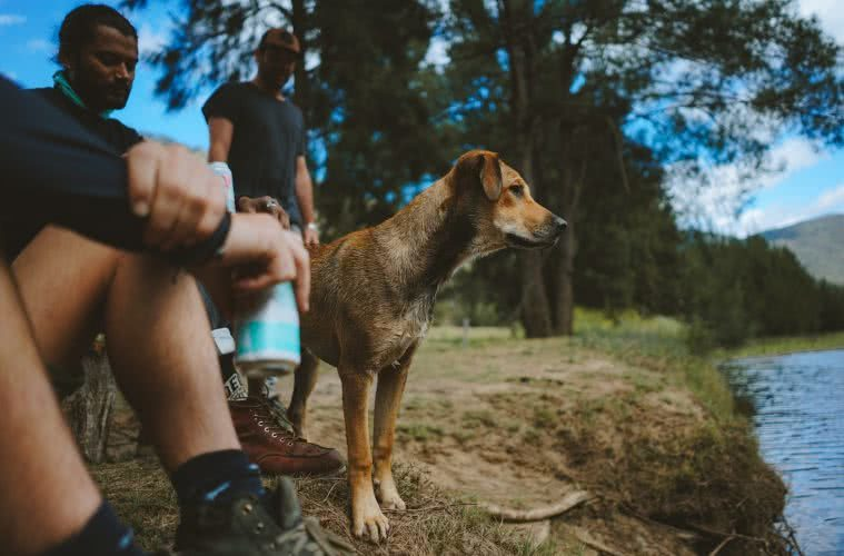 11 Awesome Dog Friendly Hikes Near Brisbane by Saphira Schroers photo by Ollie Khedun dog by the river