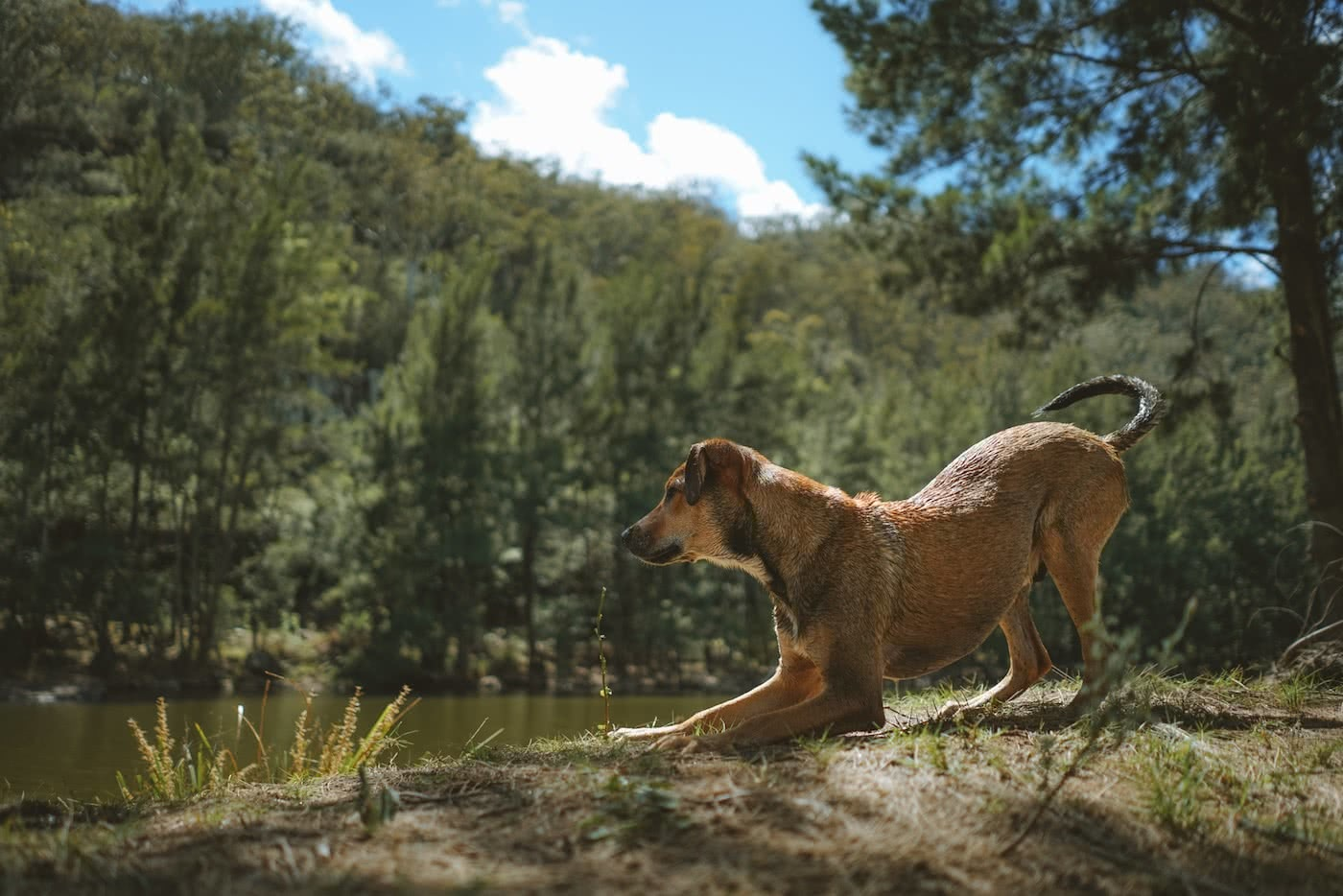11 Awesome Dog Friendly Hikes Near Brisbane by Saphira Schroers photo by Ollie Khedun