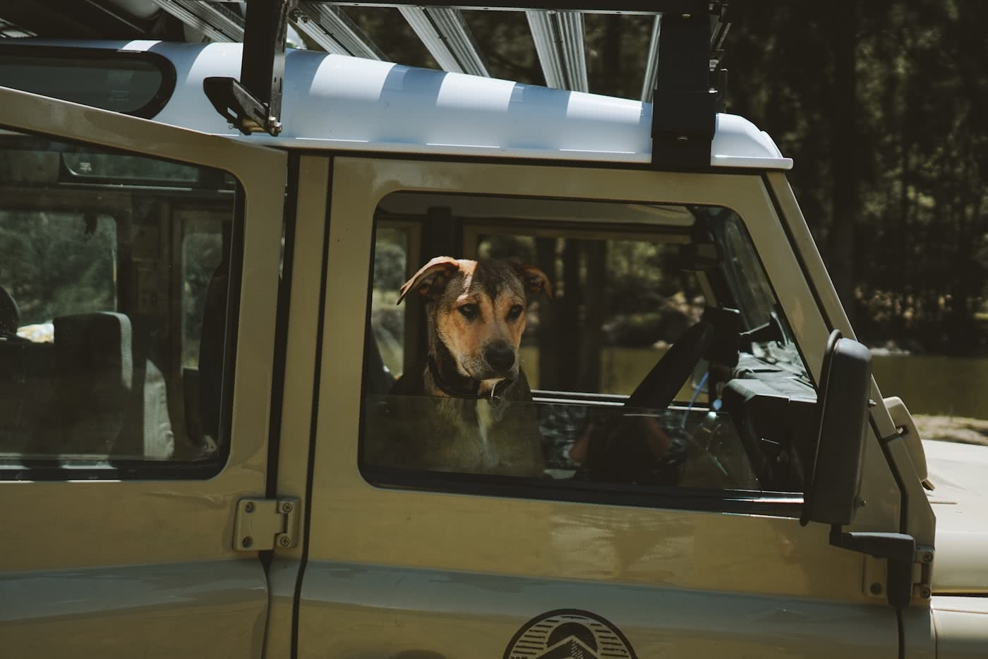 11 Awesome Dog Friendly Hikes Near Brisbane by Saphira Schroers photo by Ollie Khedun dog in a defender