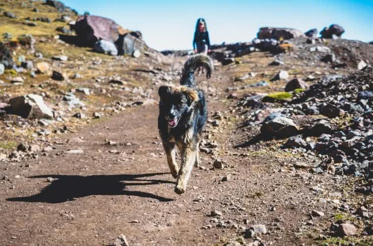 The best dog friendly campsites in Victoria, by Pat Corden, dog, backpack, adventuredog