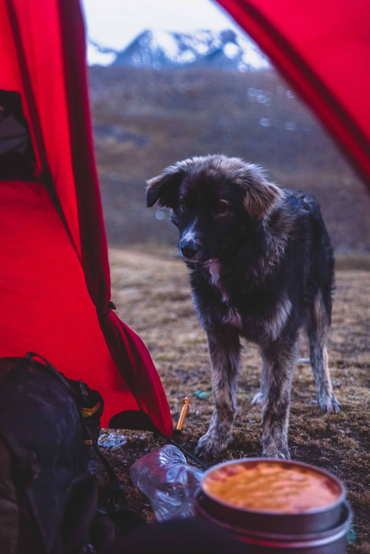 The best dog friendly campsites in Victoria, by Pat Corden, dog, tent, adventuredog
