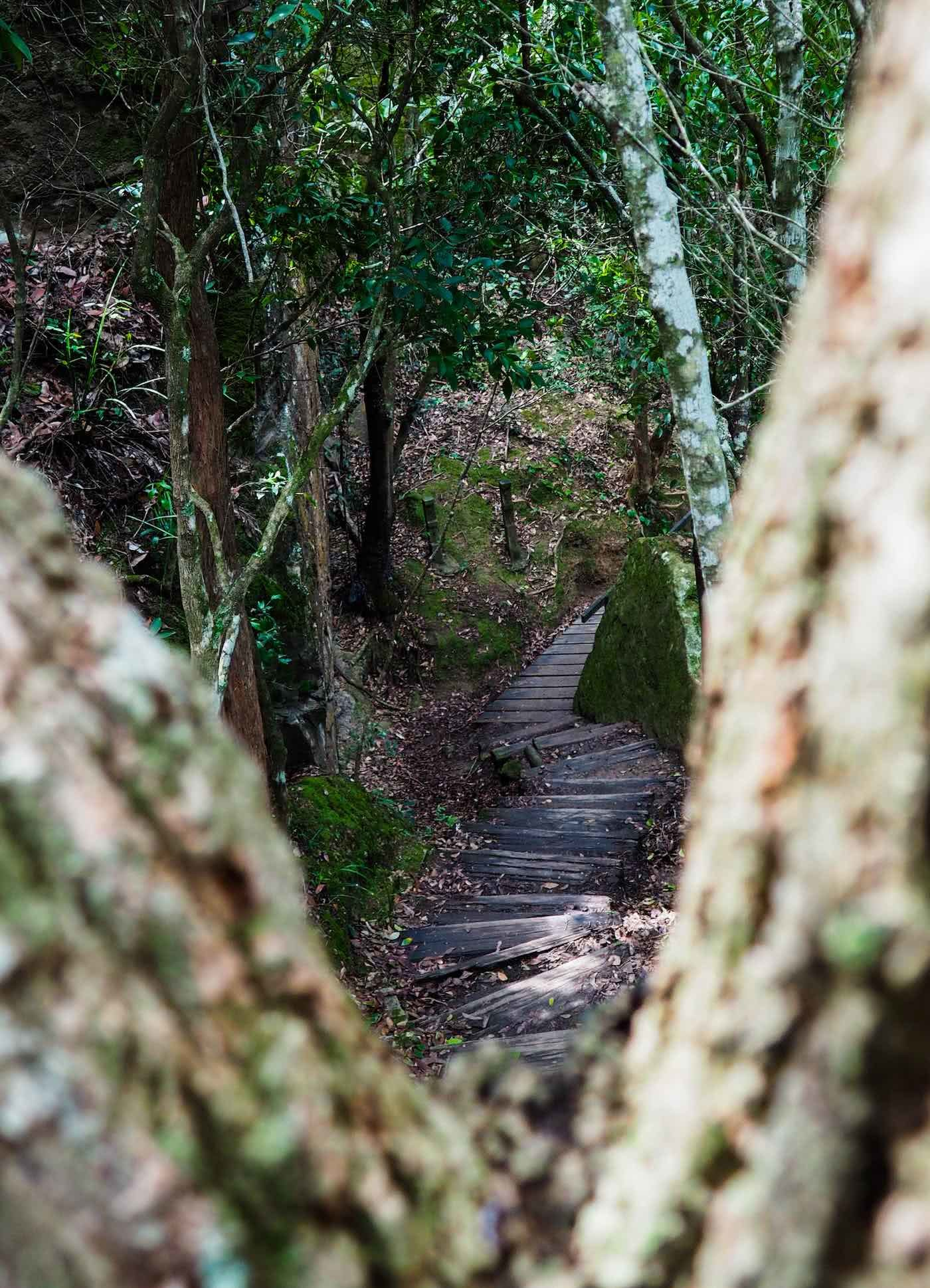 A hidden jungle - the yuelarbah track, by Damon Tually, walking track, forest steps