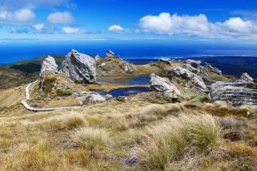 The Hump Ridge Track Could Be NZ's Newest Great Walk photo by Hump Ridge Track Ltd