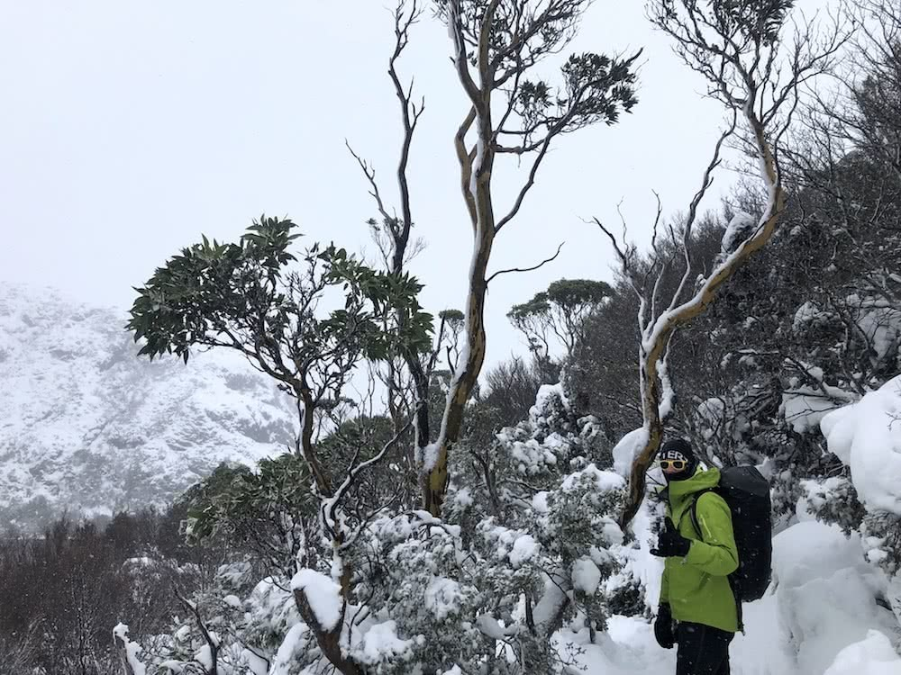 You Can Walk The Overland Track For Free (But There's A Good Reason), photo by Dom Douglas, overland track, cradle mountain lake st clair, multi day hike, snow, tasmania