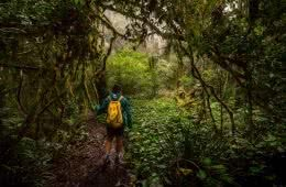 5 Reasons You Should Go Hiking In Queensland by Saphira Schroers, photo by Miranda_Fittock_ToolonaWanderings