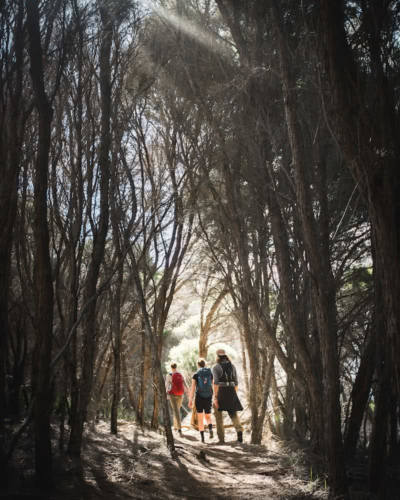 Great Australian Survivors' Trek Reaches Sydney, Nic Morley photography, james squire, hiking, forest
