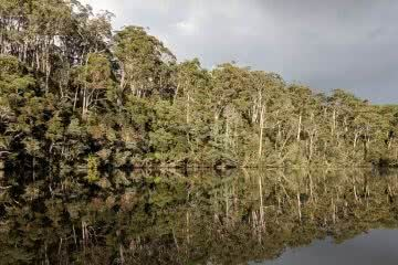 Joelle Barallon, Escaping Tassie's Heat On The Arthur River // Arthur River (TAS), reflection, tip of canoe