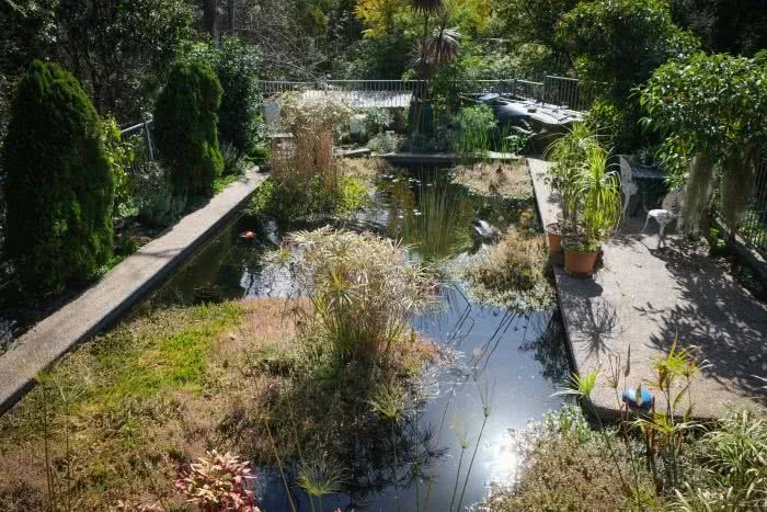 ABC, From Pool To Private Swimming Hole, pool, backyard, pond